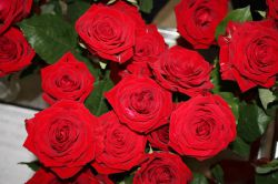 Mutttertag - Verteilung roter Rosen